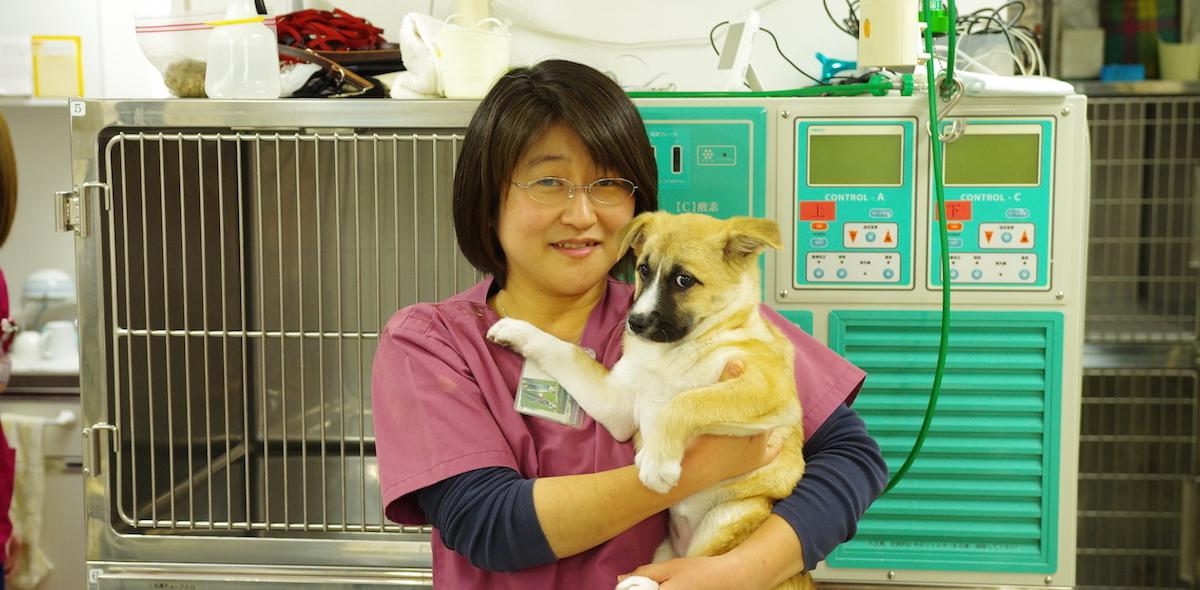 獣医師・動物看護師の求人・転職情報|E-Animal …